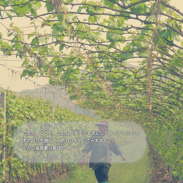 ご主人。どうか、ことし一年そのままにしてやってください。木の回りを掘って、肥やしをやってみますから。ルカの福音書13章8節#聖書