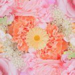0333 6月第二日曜日の「花の日」とは?