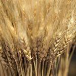 0349 「収穫は多いが、働き手が少ない」イエス・キリスト
